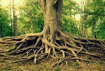 trees / by Zoe Wright