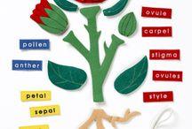 classroom ideas / by Andrea O'Meara