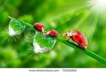I Love Ladybugs! / by Sharon Johnson