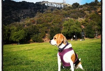 Pet-Friendly Los Angeles / Where to take Fluffy & Fido around Los Angeles! / by Los Angeles