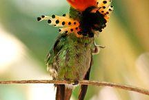 birds / by heidi Lonergan