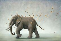 Elephants / by Debbie Cowan Nicotra