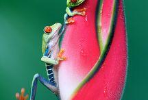Frogs and stuff / by Diane Mansanarez