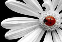 Dragonflies & Ladybugs / by Carolyn Thurn-Alarcon