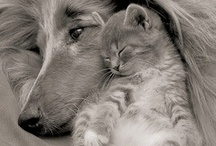 """Cute Cats / """"Time spent with cats is never wasted."""" / by Gloria Dominick"""