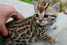 Cute Animal Photos / by Lorie Muharsky
