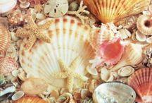 Sand, Sun, Shells & Surf / by Kathleen Kennedy Gerardi
