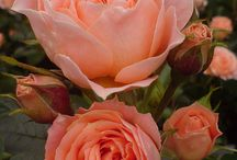 Flowers / by Owens Flower Shop