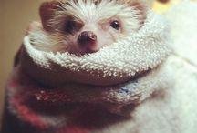 Hedgehogs / by Gerrick VanLue