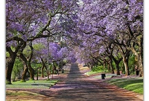 Pretoria, South Africa / Things to do in and around the city of Pretoria / by City Lodge