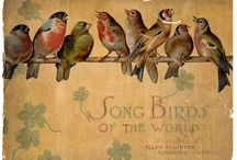 Vintage Images Birds / by Little Birdie Blessings