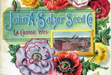 Seed Packets and Catalogs / by Karen Szuba