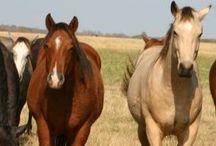 Horses / by Janelle Tyler