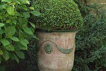 Gardening/ Container / by Donna Schaap
