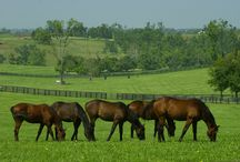 UK Equine Resources / Various Equine related information from inside and outside of the University of Kentucky.  Pins are for information only and do not indicate endorsement. Other similar sites may offer products of equal value.  / by UKANR
