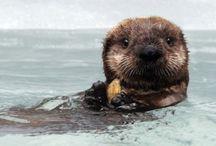 Otters / by Linda Elliott