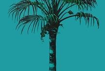 Palms / by Roy Berkenhamer