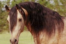 Horses / There is no feeling in the world that comes close to when you are with a horse. The gift of trust and love is amazing. They are all beautiful. / by Deborah Lund