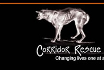 rescues / by Corridor Rescue