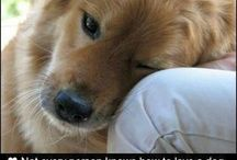 True love hopes / by Melinda Andrews