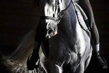 Equine Related / by Antique Mascara