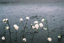 Fleurs / by Paris ⚜