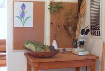 nature study table/shelf inspiration / by Nicole Handfield