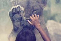 los Animales / by Kendra Lazz
