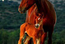~*~ Horses / Horses. Enjoy! / by Kellena M Harrington