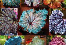 leaf casting / by Miriam Ledford