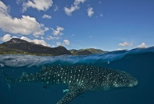 Jawsome sharks / by Shark Defenders