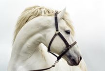 Equine <3 / by billiejo Arnold