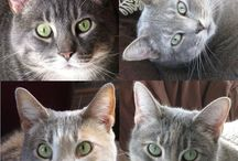 My Catster.com articles!!! / by Tofu Fairy