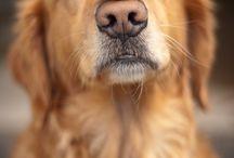 Amazing Dogs  / by Janice Rongey