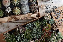 plantery / by Jenny Kleven