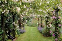 gardening / by Shannon Wolfe-Hess