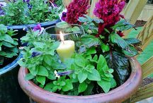 Garden/outdoors / by Candi Bryant