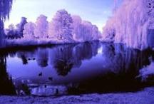 Purple / by Kelly R