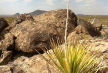 El Paso / Down in the west Texas town of El Paso! / by tamara del valle