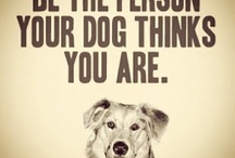 Pets Quotes / by Pieter Smith
