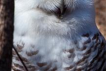 Birds / by Binghamton Zoo