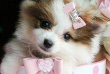 So cute / by Kimberley Amsellem