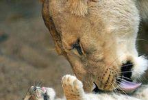 animals / by Beth Hill