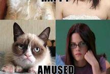 Grumpy cat!!! / by karissa durkin