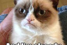 grumpy cat. always.  / by Kendra Keer