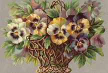 Violets and pansies, photos, prints, items / by Anna Tuomisalo