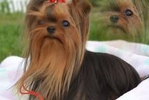 I want a new puppy / by Jana Wyckoff