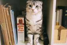 Kitty!! / Kittens, cats, felines, baby kitties  / by Sydni Powell