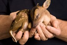 Sweetness... / All animals, great and small. Oh how I love them all! / by Julie Green-Wyrosdick