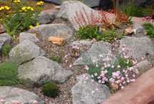gardening / by The Lavender Tub - Ellie